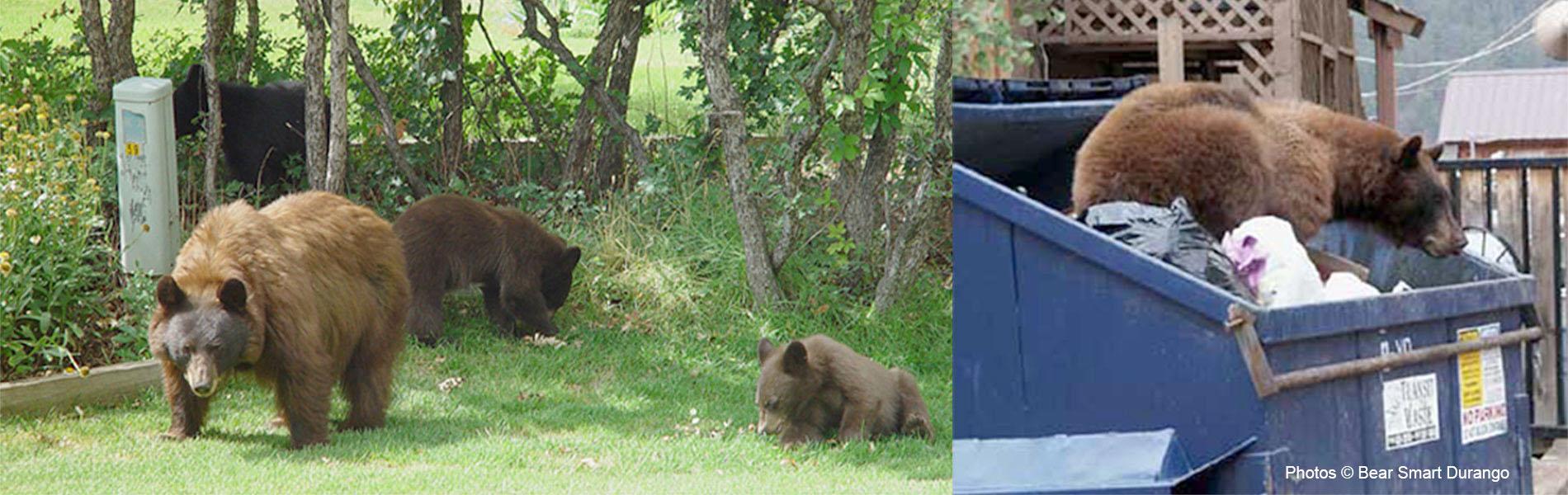 Got Bears?