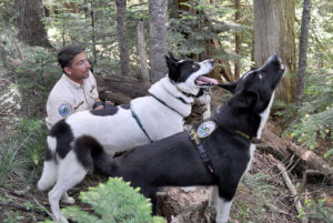 Rich Beausoleil with his bear dogs
