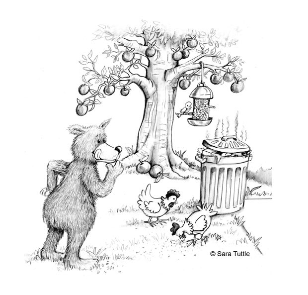What Attracts Bears And How To Prevent Problems Living With Bears