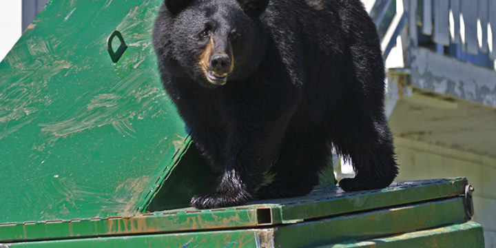 10 Tips for Bear-Proofing Your Home Year-Round