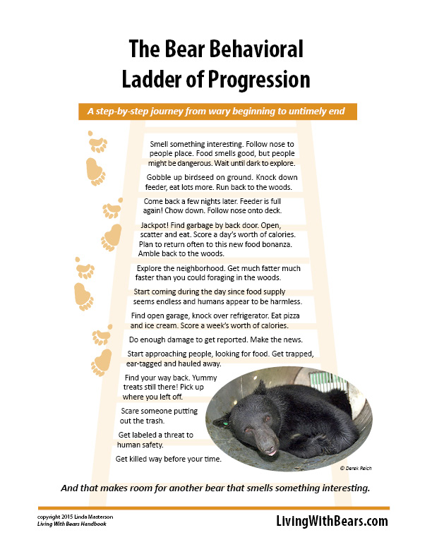 The Bear Behavioral Ladder of Progression