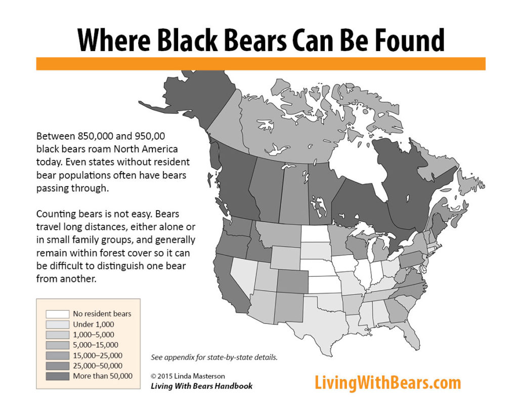 Where black bears can be found in North America